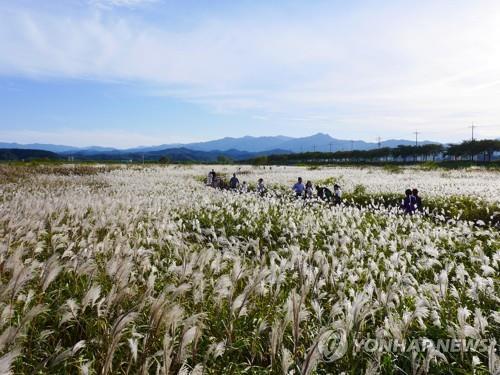 카약 타고 뗏목 타고…양양 남대천 수상레포츠 체험센터 착공