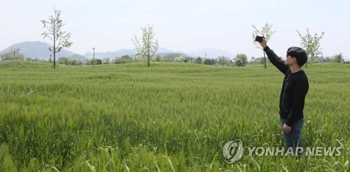 [#꿀잼여행] 영남권: 낙동강 함안엔 푸른 청보리밭, 하동엔 빨간 꽃양귀비밭