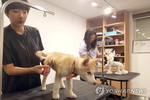 In this photo taken on Aug. 4, 2017, two employees at the PETEL Premium Suite, a hotel built for guests and their pets in Busan, 453 km south of Seoul, trim the hair of dogs as part of pet services. (Yonhap)