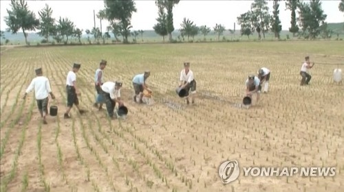 North Korean soldiers pour water onto dried-up rice paddies amid a severe drought in this photo captured from the North's Korean Central TV on June 26, 2017. (For Use Only in the Republic of Korea. No Redistribution) (Yonhap)