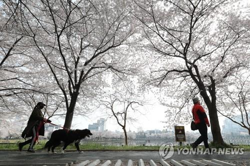 Residents keep a safe distance as they walk along a lake in Gwangju, about 330 kilometers south of Seoul, on April 4, 2020, amid the country's nationwide social distancing campaign to stem the spread of the coronavirus. (Yonhap)