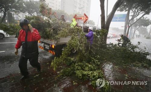 Workers are clearing a road in Jeju Island after strong wind accompanied by Typhoon Maysak toppled a street tree on Sept. 2, 2020. (Yonhap)