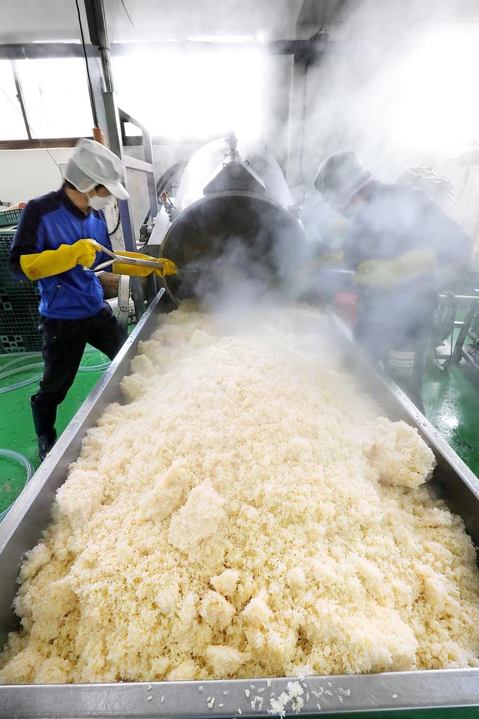막 쪄낸 고두밥을 꺼내 식히고 있다. 한 번에 240㎏의 쌀을 찌고 식히는 것은 가장 고된 작업 중 하나다. [사진/조보희 기자]