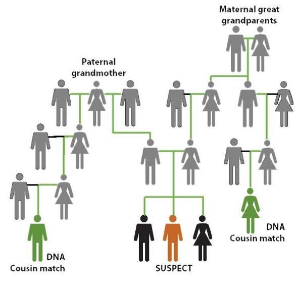 DNA 계보 분석 기법