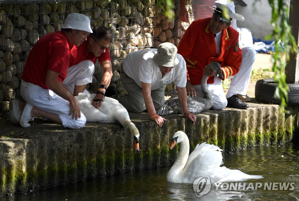 BRITAIN PHOTO SET SWAN UPPING