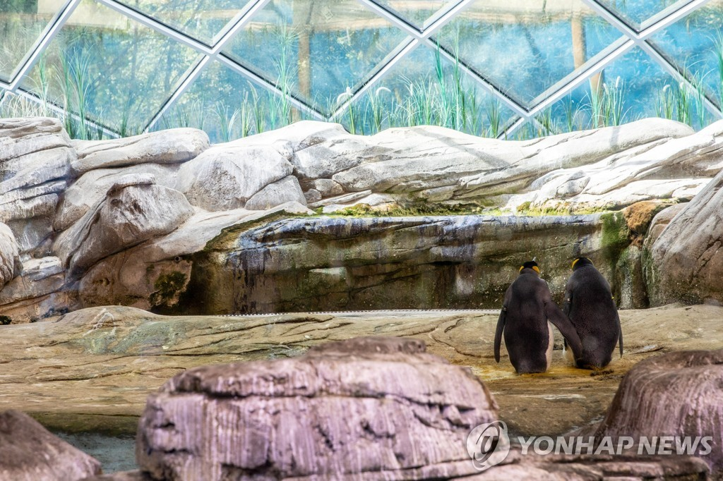 GERMANY CURIOSITIES GAY MALE PENGUINS ADOPT EGG