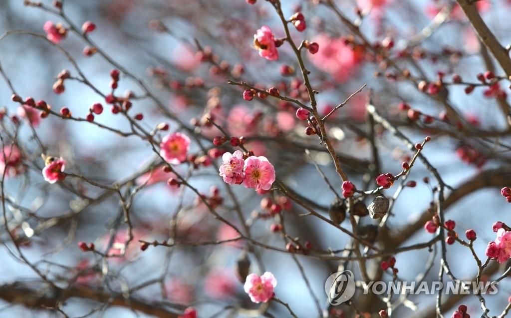 봄이 맺히다