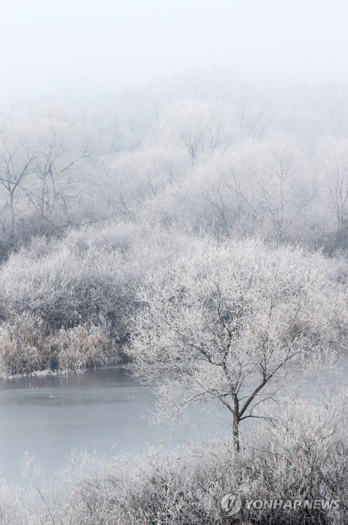 Hoarfrost forms on river
