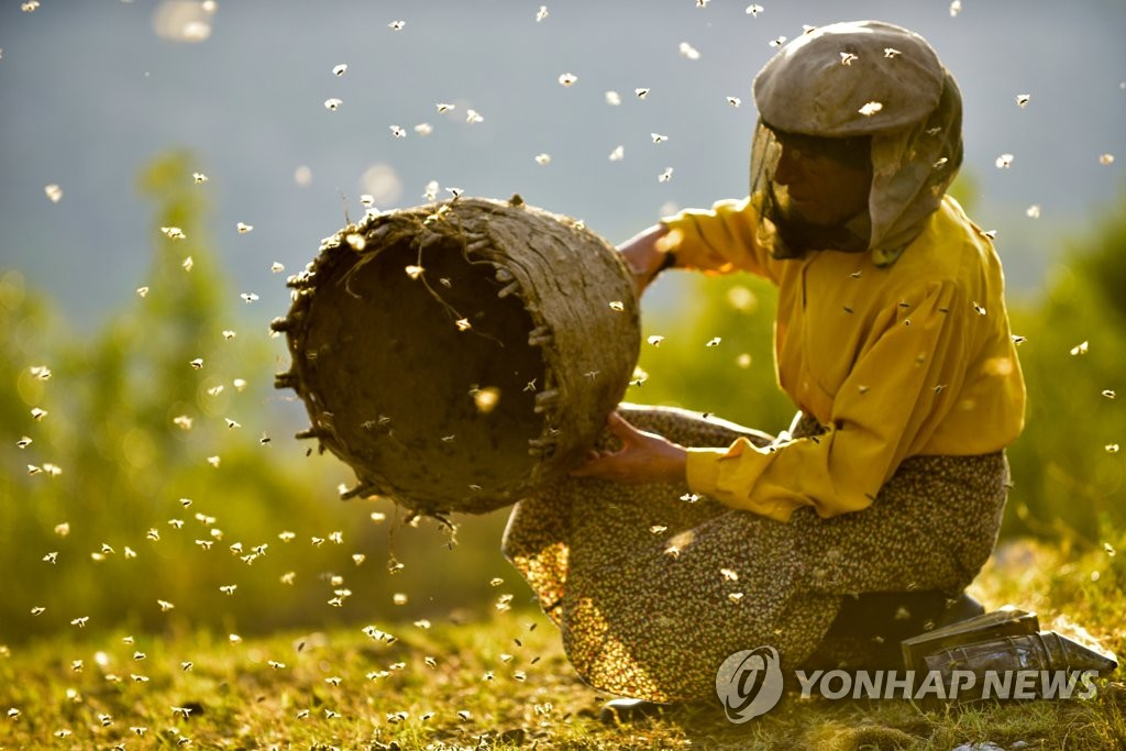 "This image provided by the Ulju Mountain Film Festival, shows a scene from ""Honeyland,"" the closing film of the festival, which runs from Sept. 6-10. (PHOTO NOT FOR SALE) (Yonhap)"
