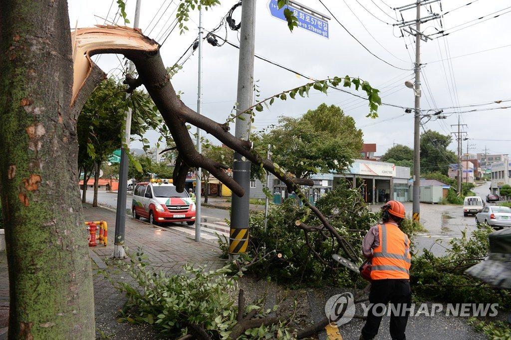 Rescue workers remove a tree that split due to strong winds caused by Typhoon Lingling in Hongseong, 150 kilometers southwest of Seoul, on Sept. 7, 2019. (Yonhap)