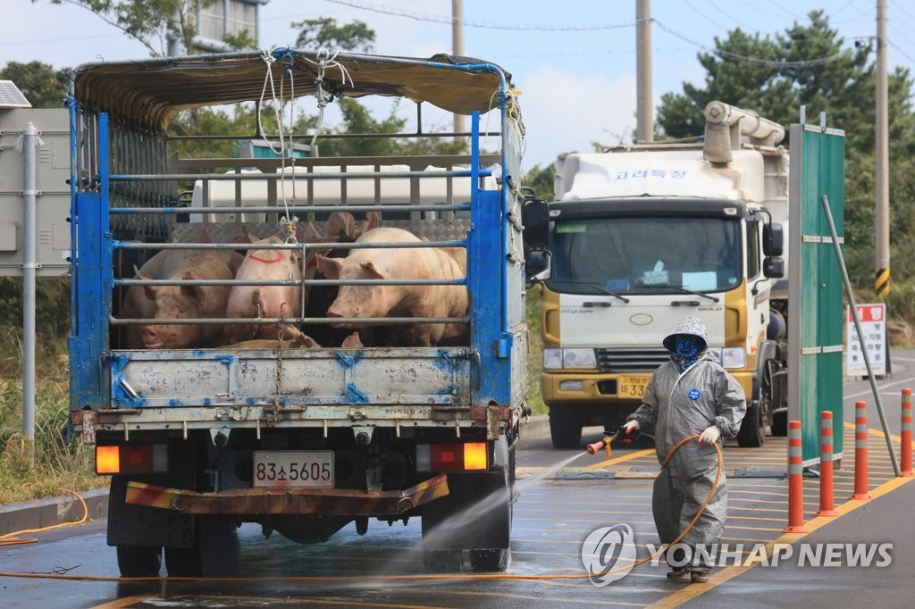 A quarantine official disinfects a truck carrying pigs on South Korea's southern resort island of Jeju on Sept. 20, 2019, as the government makes efforts to prevent the nationwide spread of African swine fever. (Yonhap)